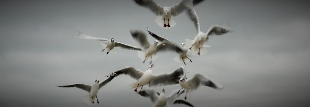 Fuglevernområdet «Mewia Lacha». Sykkelutflukter – Hit The Road Travel