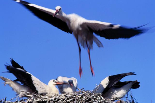 Storker. Sykkelutflukter – Hit The Road Travel