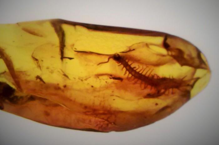 Ravklump med innkapslet insekt, utstillingen på Gdansk Universitet. Reise til Sopot, Gdansk og Malbork – Hit The Road Travel