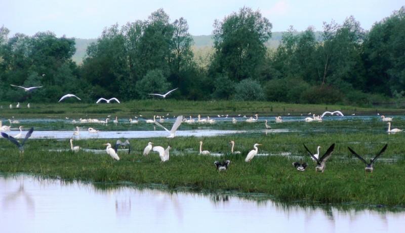 Våtmarksområder i Wartadeltaets Nasjonalpark. Naturopplevelser i Polen – Hit The Road Travel