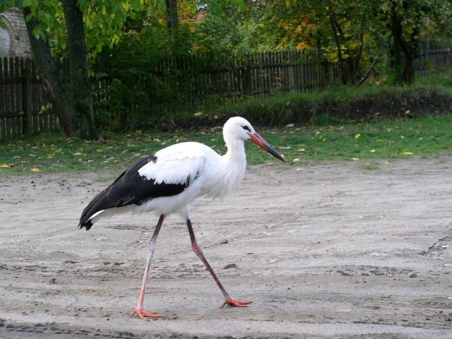 Stork. Temareiser til Polen. Polentur – Hit The Road Travel